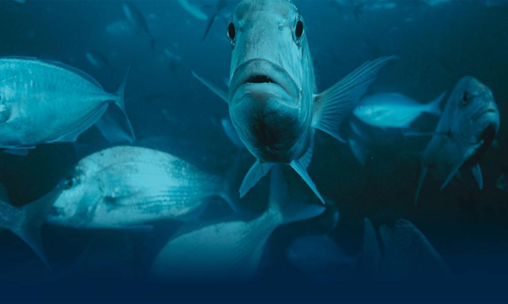 Ngati Porou Seafoods Group